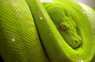 serpiente_1280x960--=KZKG^Gaara_Collection=--